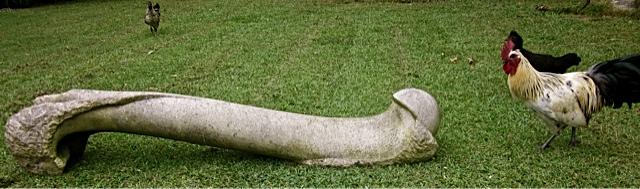10 - Fémur de perro - piedra granito - 150x30x25cm - 2007