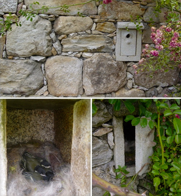 19 - Nido en muro - piedra granito