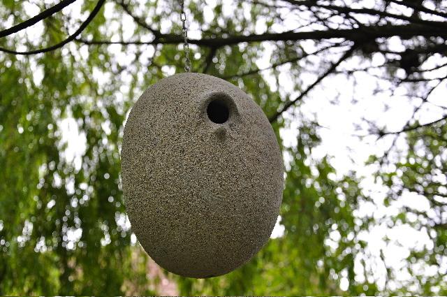 3 - Nido de carbonero (cría confirmada) - piedra granito