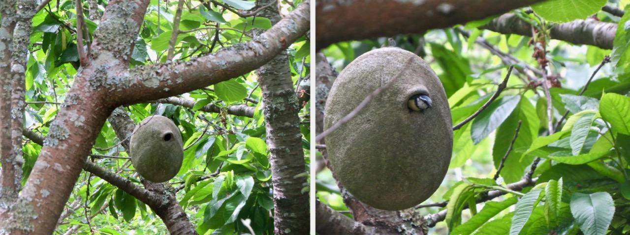 Caja nido de piedra
